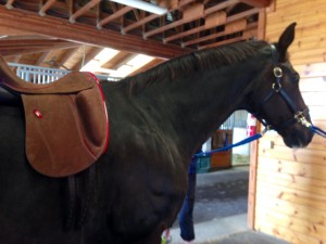 Lemke Dressage with brown Bull Hide leather with Red leather trim. For super grip. Knee blocks are designed very straight.