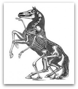 horse-anatomy-01