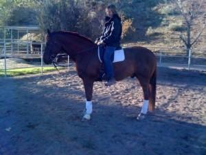 Sheryl feeling the saddle after reflocking & fitting a saddle